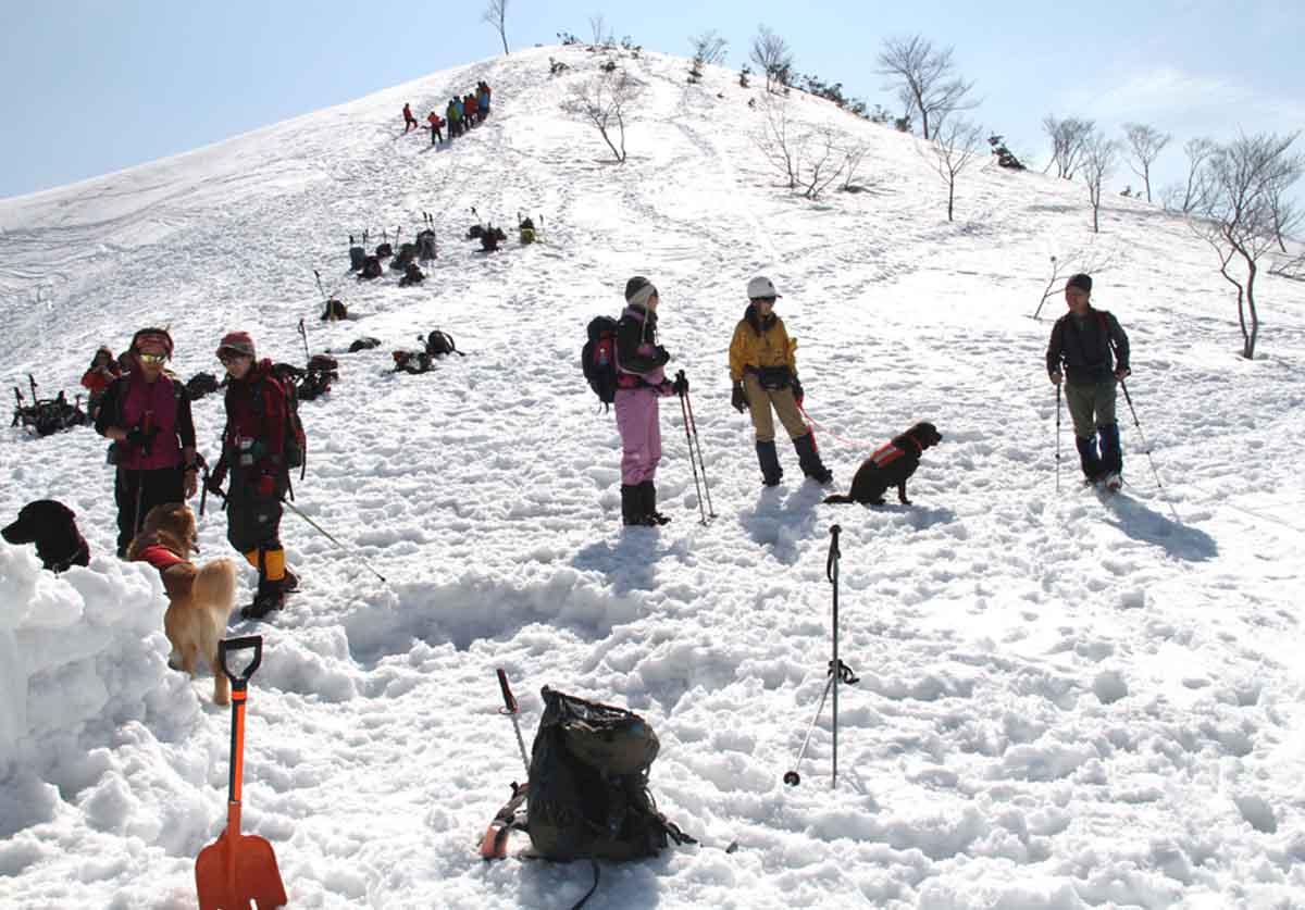 谷川岳雪中捜索訓練(58)