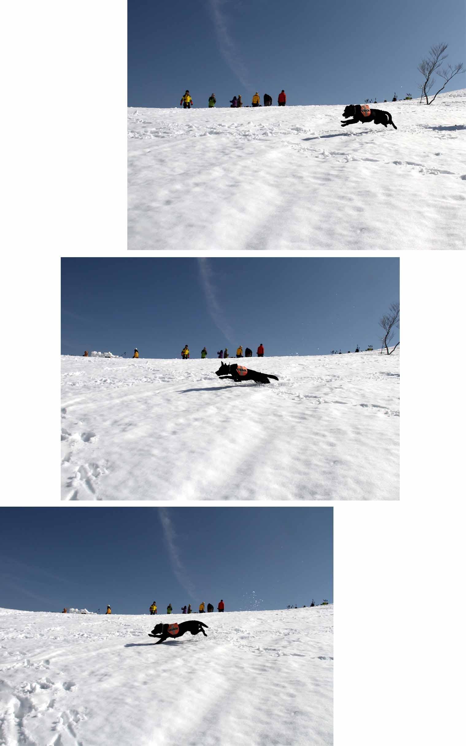 谷川岳雪中捜索訓練(60)