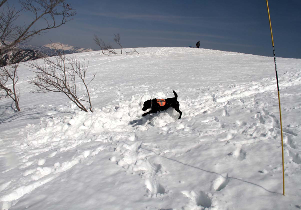 谷川岳雪中捜索訓練(61)