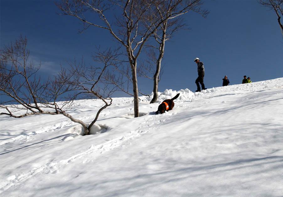 谷川岳雪中捜索訓練(65)
