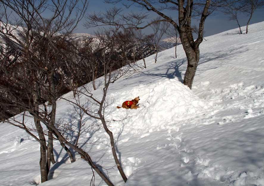 谷川岳雪中捜索訓練(70)