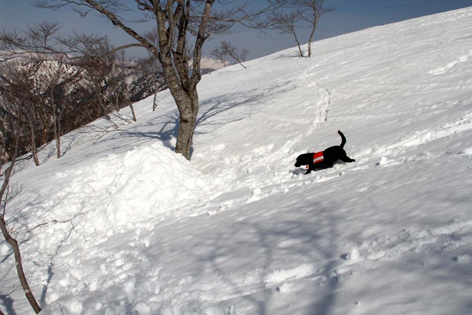 谷川岳雪中捜索訓練(73)