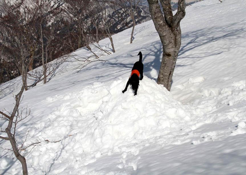 谷川岳雪中捜索訓練(75)
