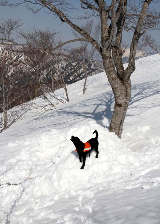 谷川岳雪中捜索訓練(74)