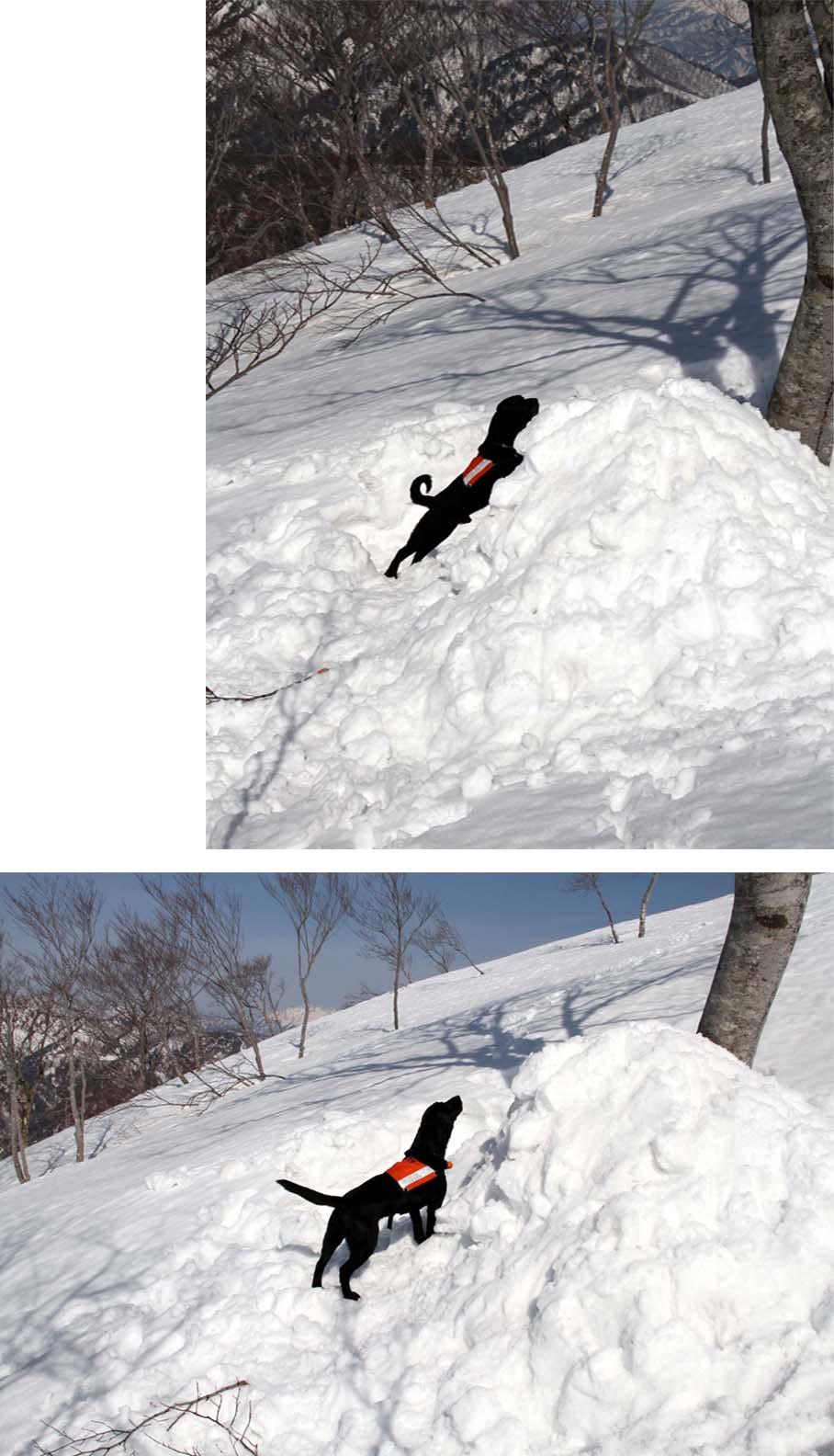谷川岳雪中捜索訓練(76)