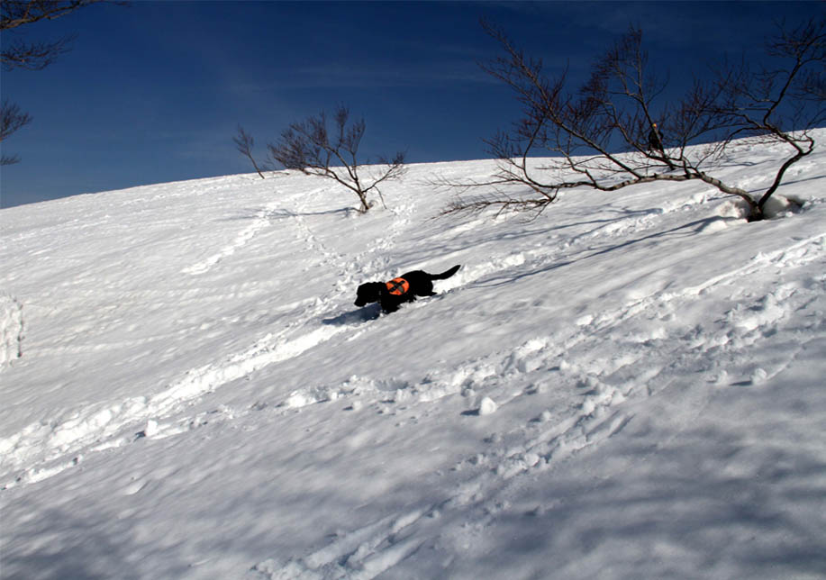 谷川岳雪中捜索訓練(77)