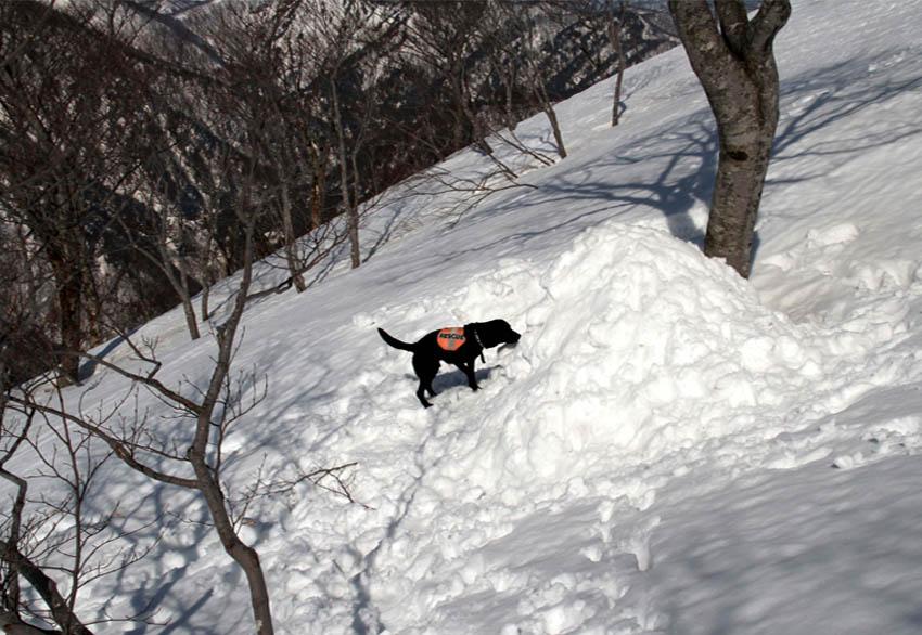 谷川岳雪中捜索訓練(78)