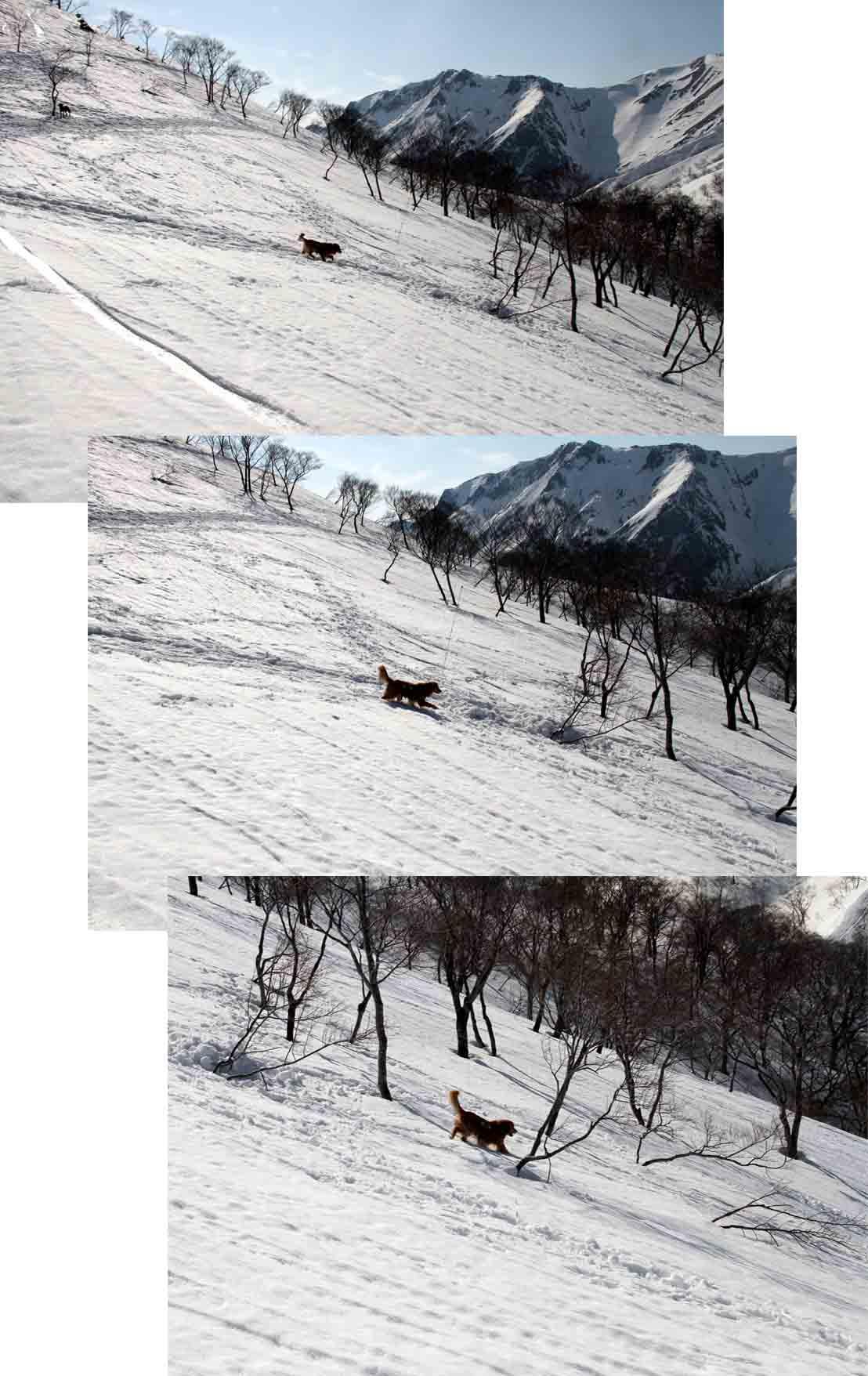 谷川岳雪中捜索訓練(82)