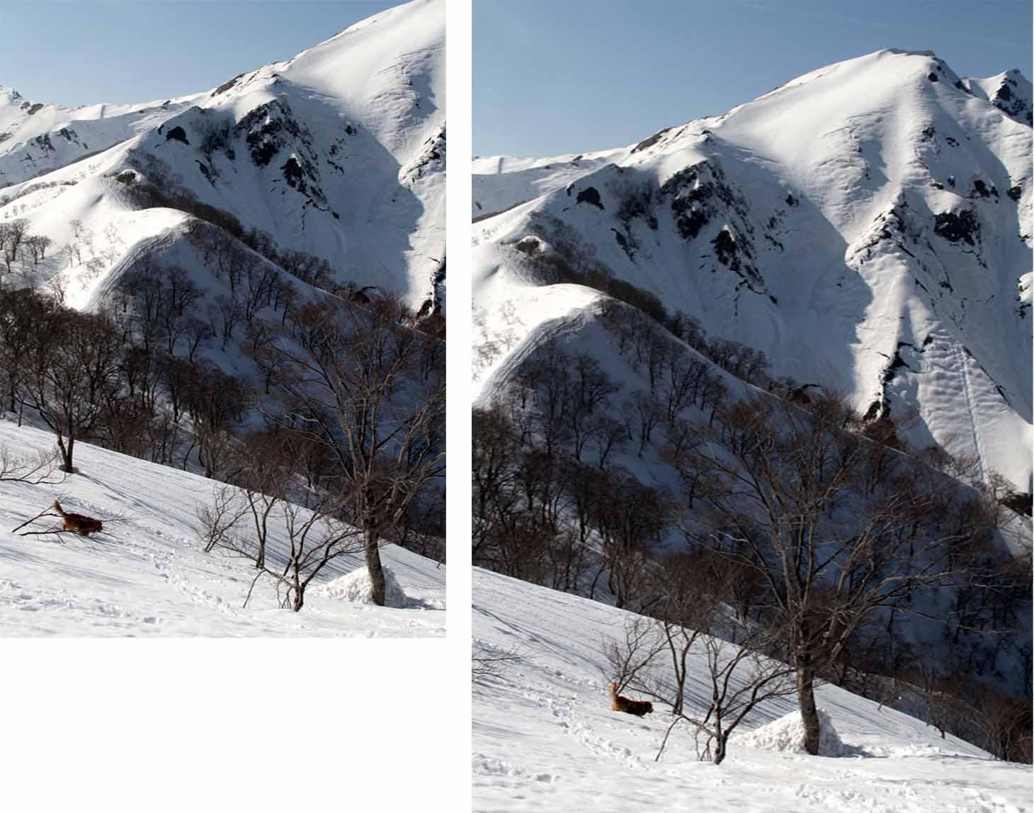 谷川岳雪中捜索訓練(83)