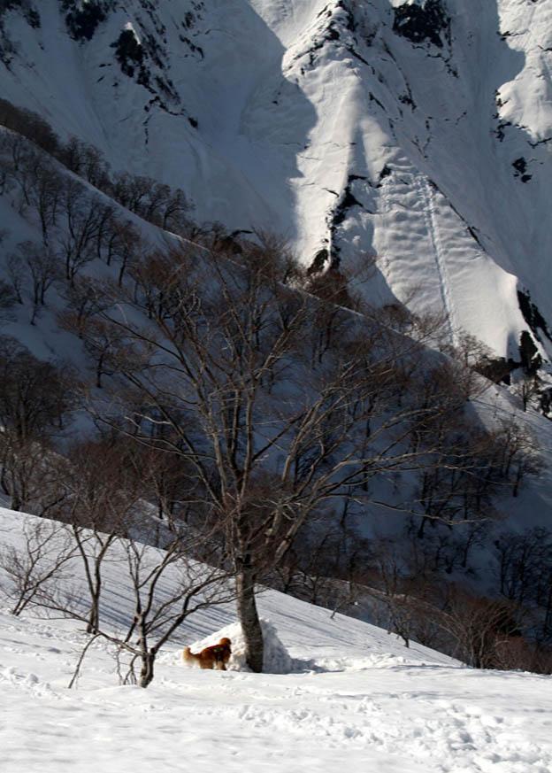 谷川岳雪中捜索訓練(84)