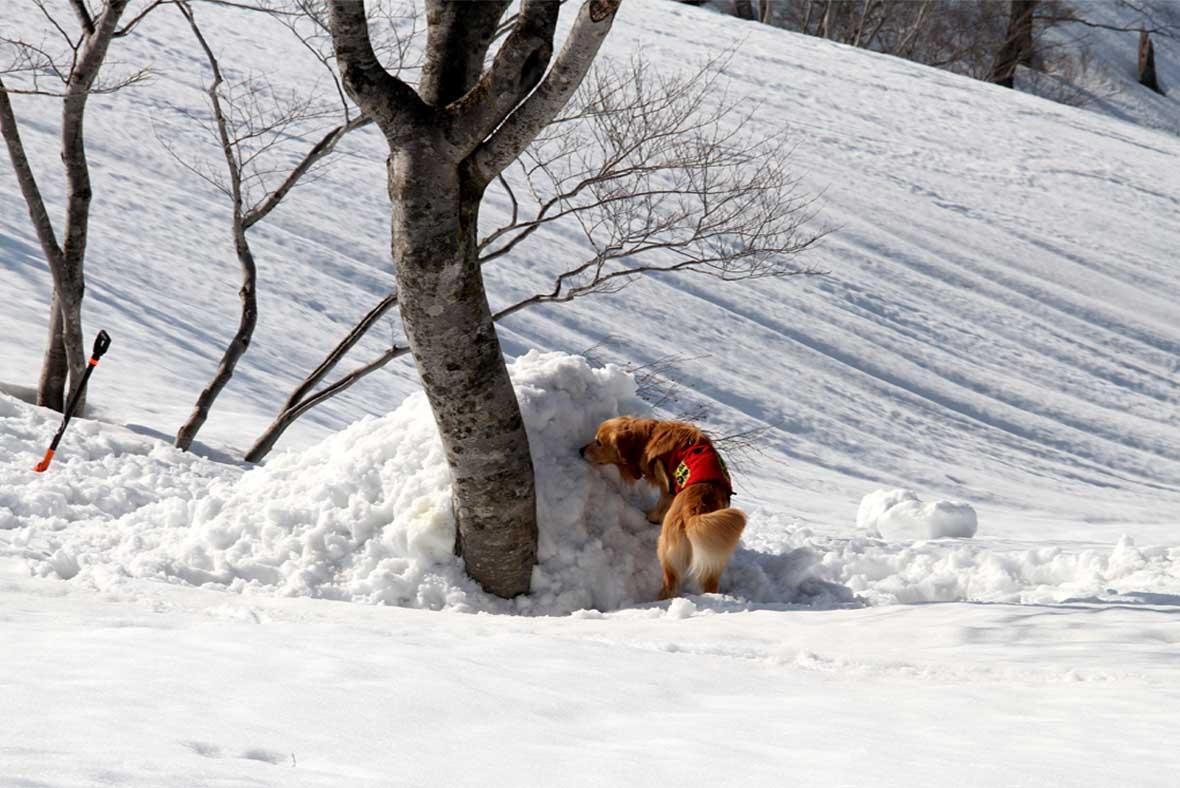 谷川岳雪中捜索訓練(86)