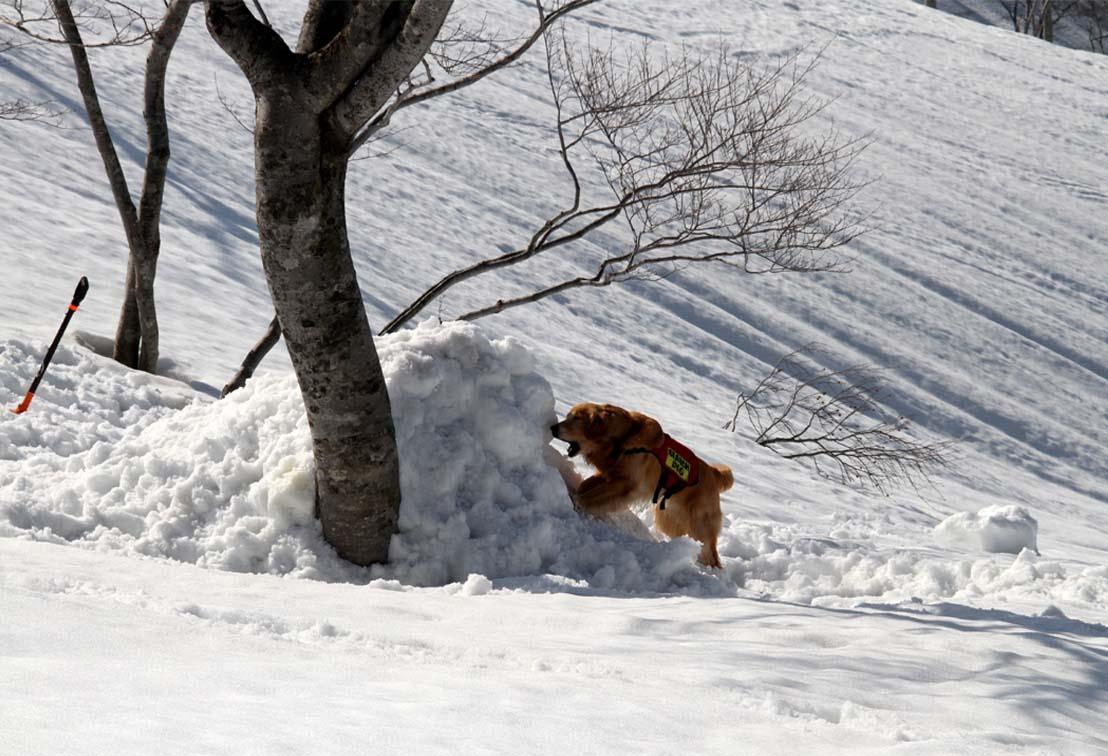 谷川岳雪中捜索訓練(88)
