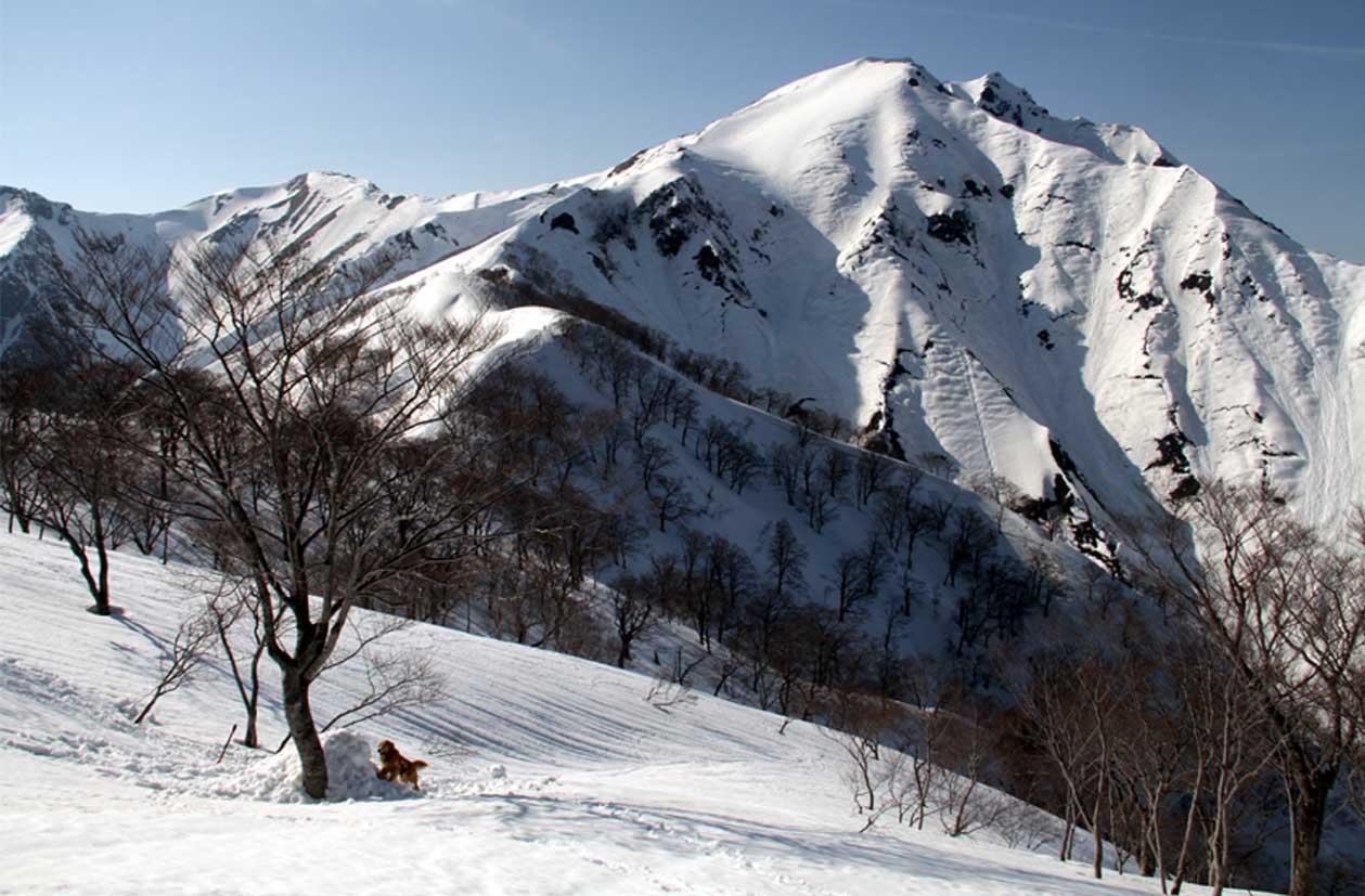 谷川岳雪中捜索訓練(89)