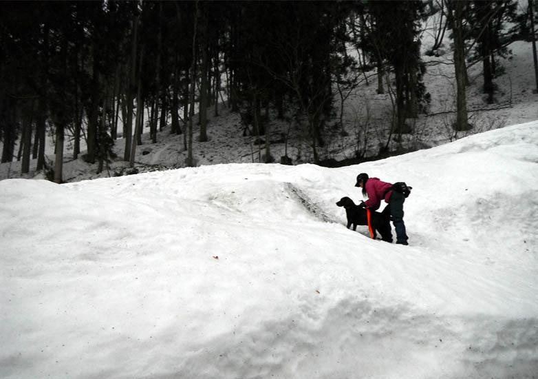 谷川岳雪中捜索訓練(100)