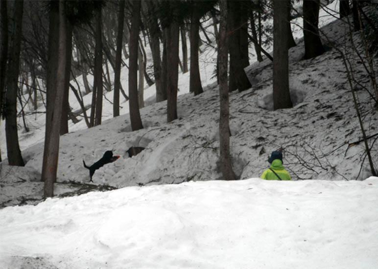 谷川岳雪中捜索訓練(102)