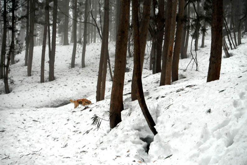 谷川岳雪中捜索訓練(104)