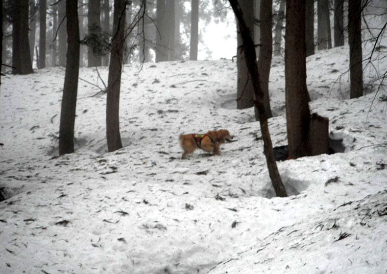 谷川岳雪中捜索訓練(105)