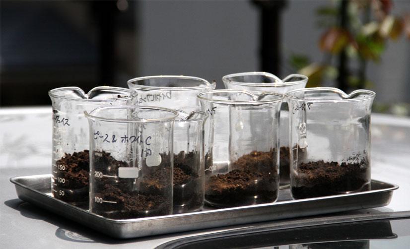 バラの土壌のpH調査(1)