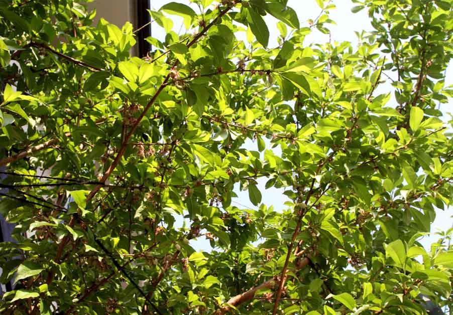 桃の様子 20140426(2)
