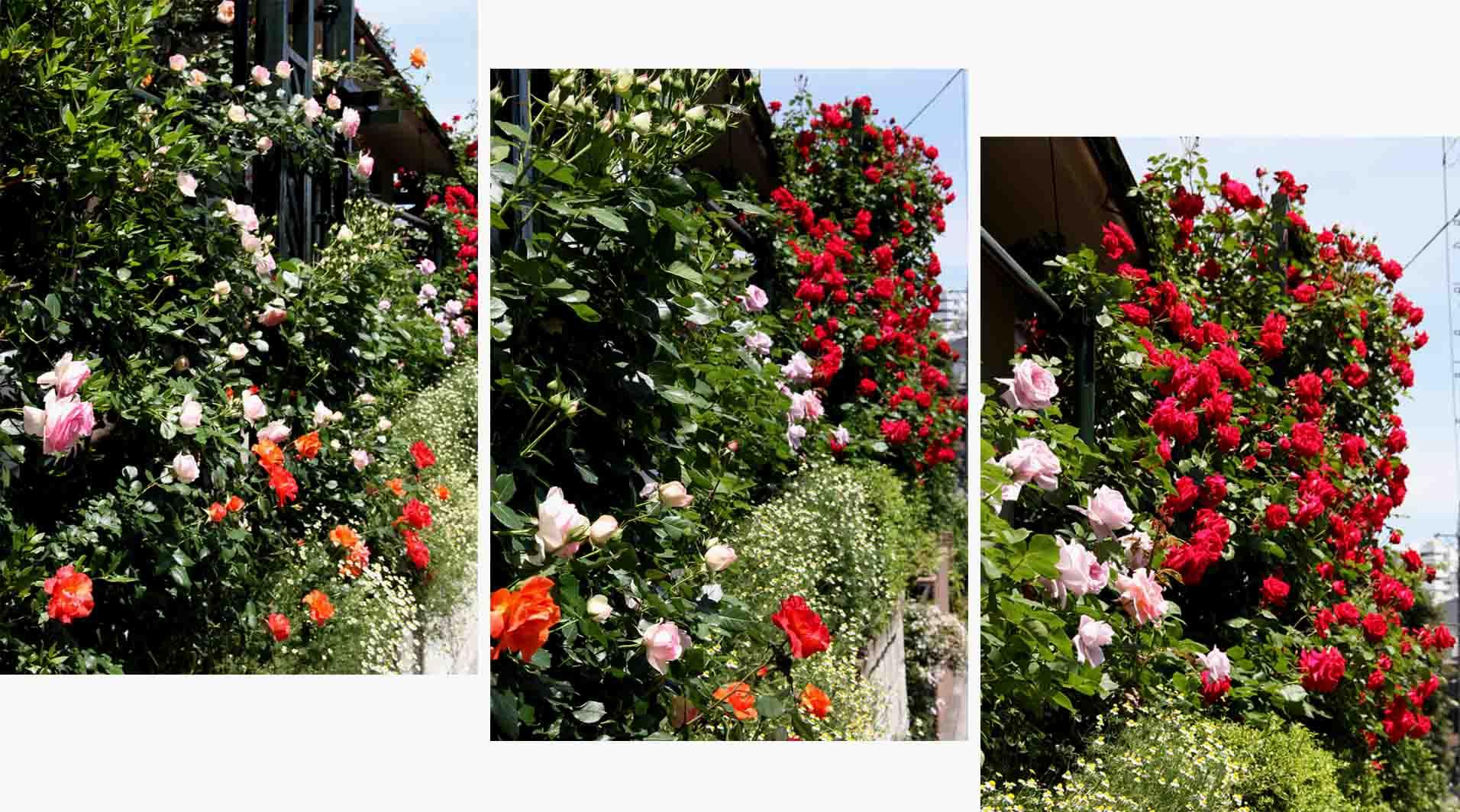花やしき?(3)