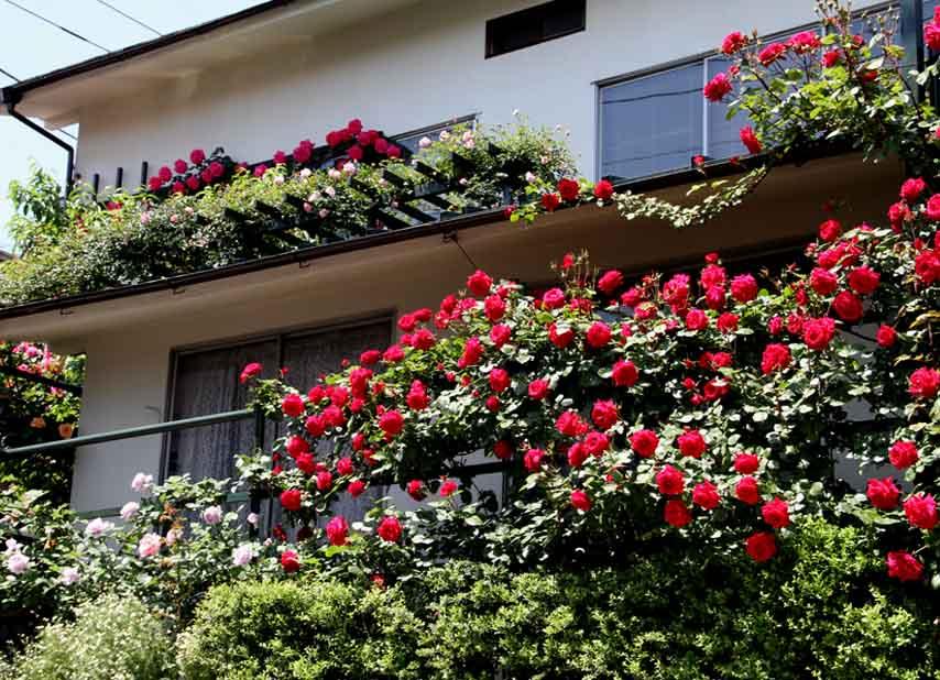花やしき?(5)