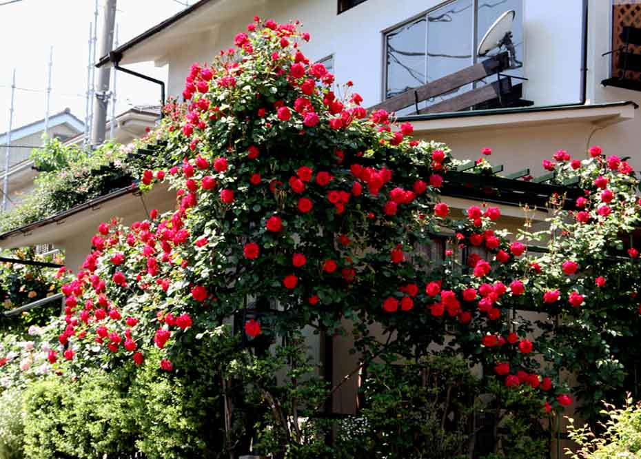 花やしき?(6)