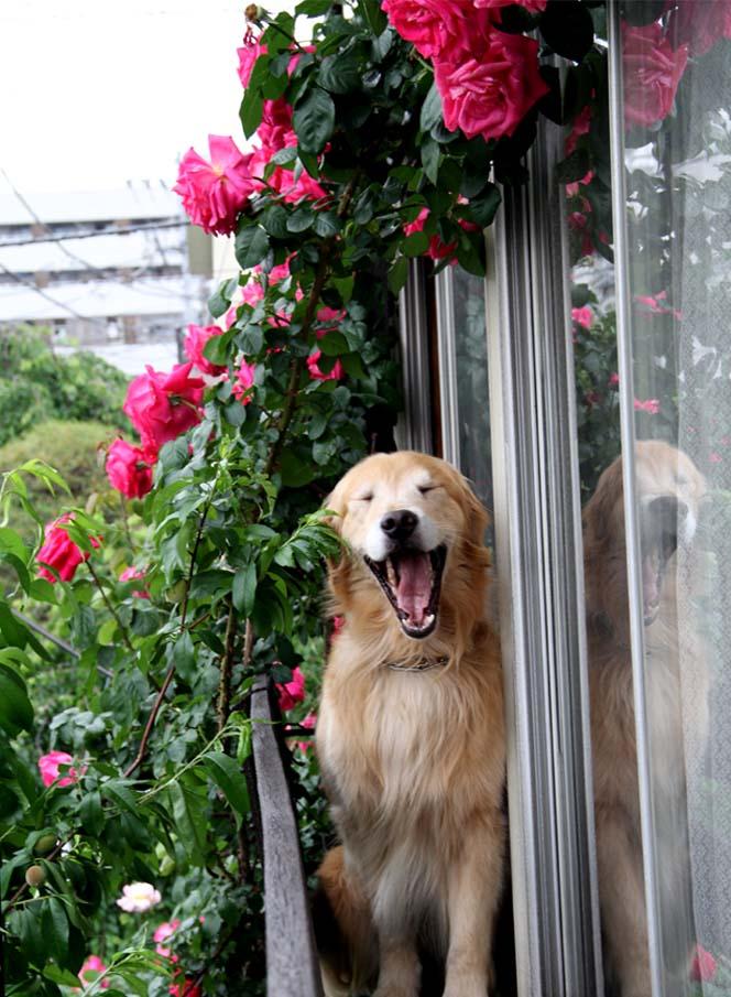 犬とバラの日々(6) 0514