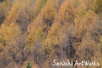 日本画のような淡いイメージ