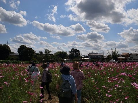2014-10-08 秋にせせらぐ入間川とコスコス畑を歩こう 035