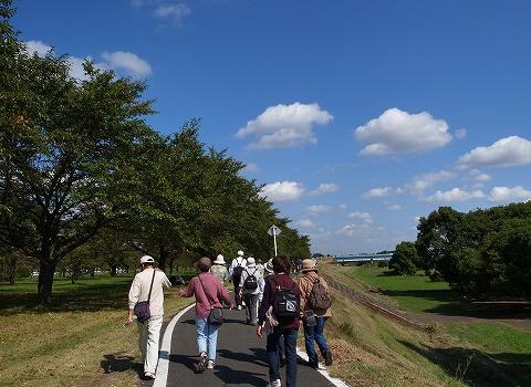 2014-10-08 秋にせせらぐ入間川とコスコス畑を歩こう 014