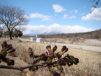 那須山と桜