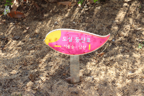 140406namsan (4)