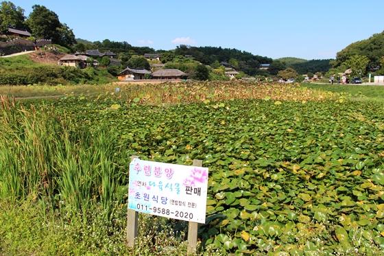 141003kyonju (5)