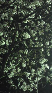 ソプラノ歌手♪佐藤智恵のオフィシャルブログ-100330_1933~01.jpg