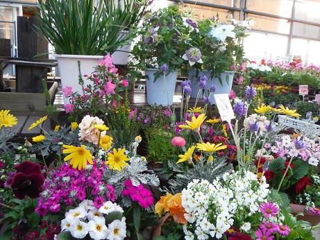 20140222花鉢コーナー