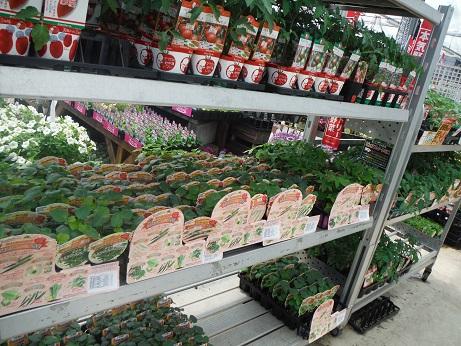 20140426ブランド野菜