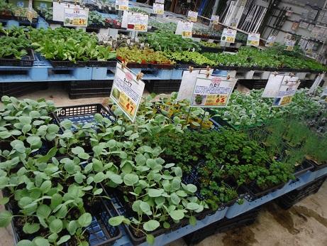 20140829野菜