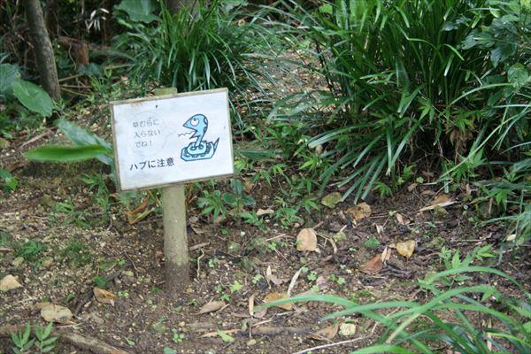 6 3 沖縄012