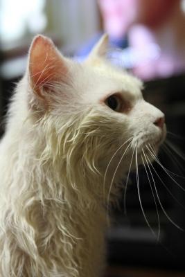 shampoo at home2 resized