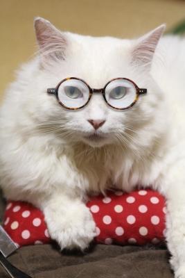 great writer glasses