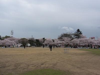 IMG_5866himeji.jpg