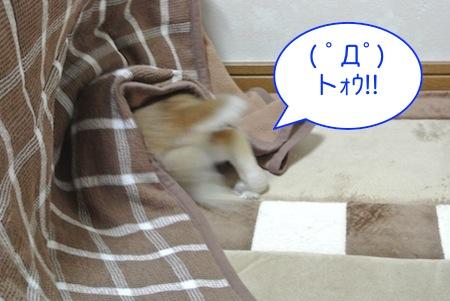 DSC_2101.jpg
