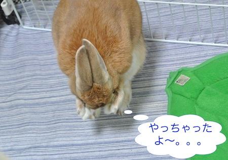 DSC_9398.jpg