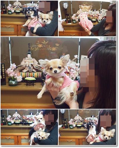 4兄妹とひな人形?!
