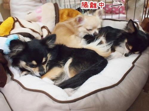 初めての3兄弟ベッドでまったり♪