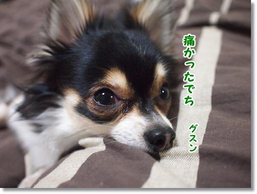 風ちゃんごめんね(涙)