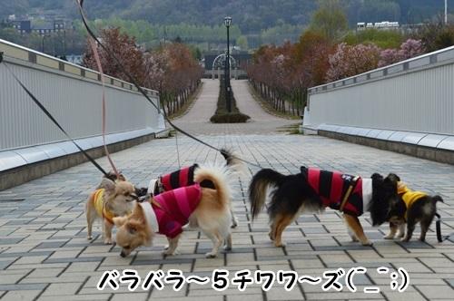 DSC_0419-1_20140511080020566.jpg