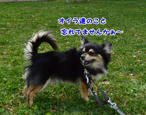 DSC_0432-1.jpg