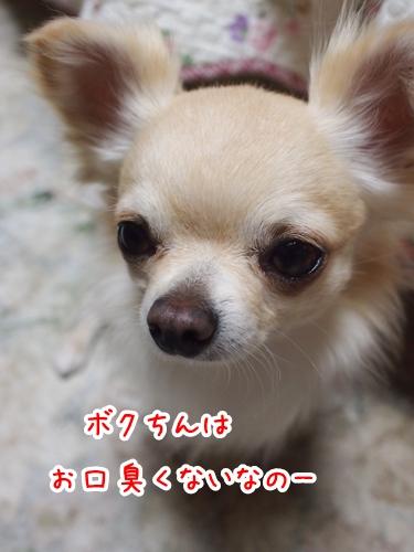 P3271237-01.jpg
