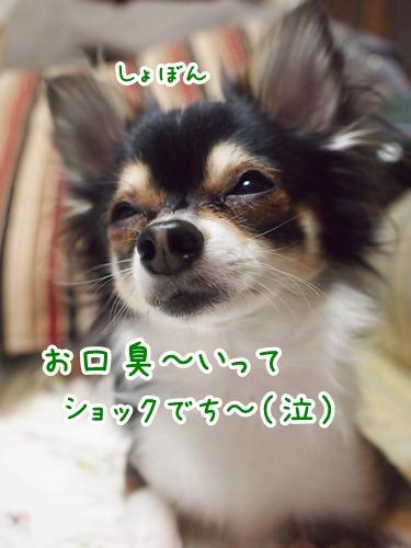 P3271245-01.jpg